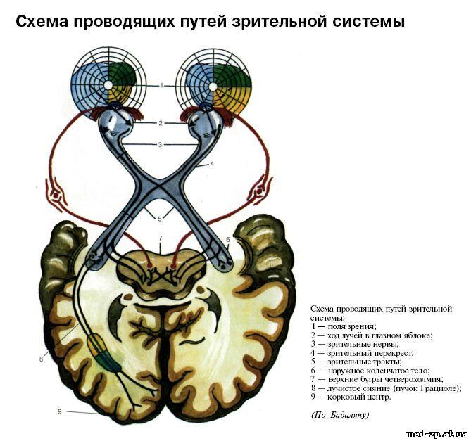Патологическая анатомия экзамен